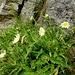 Blumen versüssen den Aufstieg