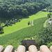 ein kleiner Weinberg schmiegt sich an den Burghang