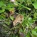 auch ein kleiner Frosch wird mal groß