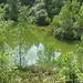 NSG St.Avold. Ein kleiner Teich mitten im ausgedehnten Wald.