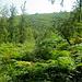 Wald.