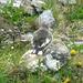 """Bei Sorebois : Ein Schneesperling (Montifringilla nivalis) von hinten. In älterer Literatur noch als """"Schneefink"""" bezeichnet.<br />Diese geselligen, oft wenig scheuen Hochgebirgsvögel konnten wir einige Male in den Bergen um Zinal herum beobachten. Im Flug zeigen sie viel Weiss im Gefieder und sind dann sehr auffällig, wenn sie im Trupp umherfliegen."""