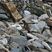 Bin etwas überrascht, ein Murmeltier in dieser Steinlandschaft anzutreffen.