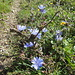 Schöne Blumen am Wegrand