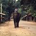 Das Dorf Sapa, hier reiten gewisse Bauern noch Elefanten!!! Arbeitselefanten