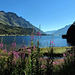 Wohl der schönste Morgenspaziergang, den man in der Schweiz machen kann. Von Maloja dem Silsersee entlang nach Isola.