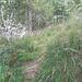traccia nell'erba in prossimità di Antrona
