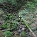 Un riale lungo il sentiero che sale ad Haidach.