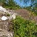 Gruss von den Ameisen am Abstieg vom Crestone an [u Basodino]