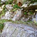 ACHTUNG KOPF EINZIEHEN - Abstieg von der Ruine 1841 nach Pertüs. Man achte die Felsvorsprung oben