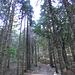 Il bosco dietro il Rifugio Porta