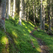 Im Wald hinauf zum Griebnjini Unnerstafil
