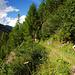 Schöner Steig nach Jenisberg