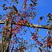 Herbst im Valsugana