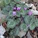 Schöne Blumen mitten im Gestein