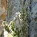 Interessant wird es hier: Um die Felsen herum und über den schmalen Felsgrat.