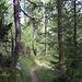 Waldweg beim Abstieg
