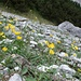 Blumen beim Abstieg vom Lamskar ins Zwerchloch