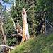 Der Waldgeist bei Dors