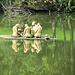 schwimmende Skulpturengruppe auf dem Giessenparksee
