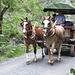 ein Stellwagen fährt vom Alten Bad Pfäfers zurück nach Bad Ragaz