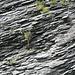sogar in dieser schroffen Felswand haben sich Pflänzchen angesiedelt