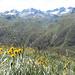 Blumen und Berge, Herz, was willst du mehr?