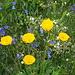 Blumenzauber bei der Hütte