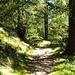 im Aufstieg durch's Binntal....ein kurzes schönes Stück durch den Lärchenwald