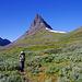 [u Diapensia] in den Lappland Weiden (Salix lapponum)