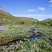 Der schmale Pfad führt durch die Lappland Weiden
