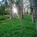 Morgens im Bergwald. Der untere Teil der Route liegt vormittags noch im Schatten.