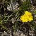 kennt jemand diese Blume?