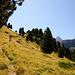Baumbestand bis über 2100 m Seehöhe