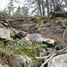 Discesa dall'alpe Larciero lungo il vecchio ripido sentiero