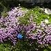 Blumenidylle in Sextner Dolomiten!