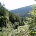 intakte Waldgebiete - vor dem schlimmen Herbstorkan Ende 2004