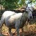 Schöne, freilaufende Schafe