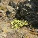 Kaktus am Wegesrand beim Abstieg
