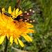 hier findet man wieder Zeit um die Flora und Fauna zu bestaunen