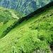 Am Anfang der Trottinett Route zum Vorstegstock: Eine deutliche Wegspur führt durch die Erlen hoch aufs Gras. Wer den Nordgrat beschreiten möchte, der muss spätestens hier den Weg verlassen.