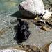 Auch beim Rückweg genießt Shaddy das Bad im kühlenden Nass