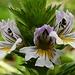 Kleine Blüten ganz gross: Die Wiesen waren voll davon.