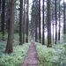 Es geht durch viel Wald