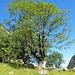 Hochsommer an der Obereintalhüte (sie liegt unmittelbar rechts unterhalb des Baumes).