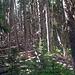 Nur einige Hundert Meter neben dem Lake Louise mit seinem Schlosshotel beginnt der Urwald
