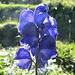 Von den vielen schönen Blumen sind sie fast als einzige noch übrig geblieben