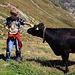 Junger Bergwanderer trifft junge Kuh :-)