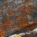 Landkartenflechten am Ochsenhorn