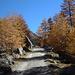 Goldener Herbst im Val Chamuera